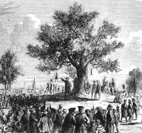 Liberty_Tree.jpg