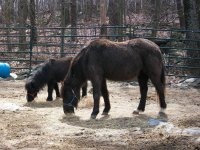 2 hairy horses.jpg