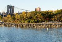 Fall Foliage Under Brooklyn Bridge.jpg