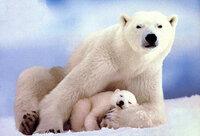 polar_bears-Mom_n_Baby.jpg