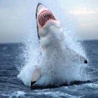sharktown