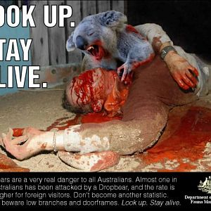 Drop Bear Warning Sign 2011
